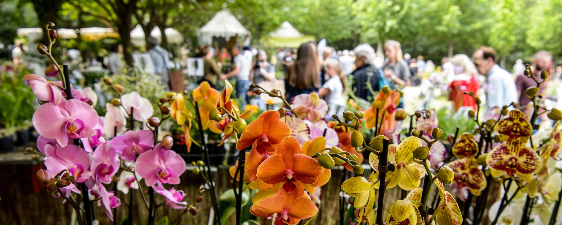 27e édition des Journées des Plantes d'Albertas – Bouc Bel Air – 24 au 26 mai 2019
